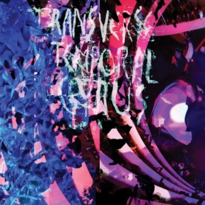 Stream Animal Collective's Record Store Day release